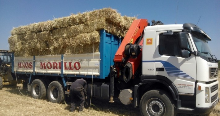 operario cargando bloques de paja en un camión volquete en Talavera de la Reina
